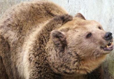 Мечок от зоопарка в Добрич се събуди